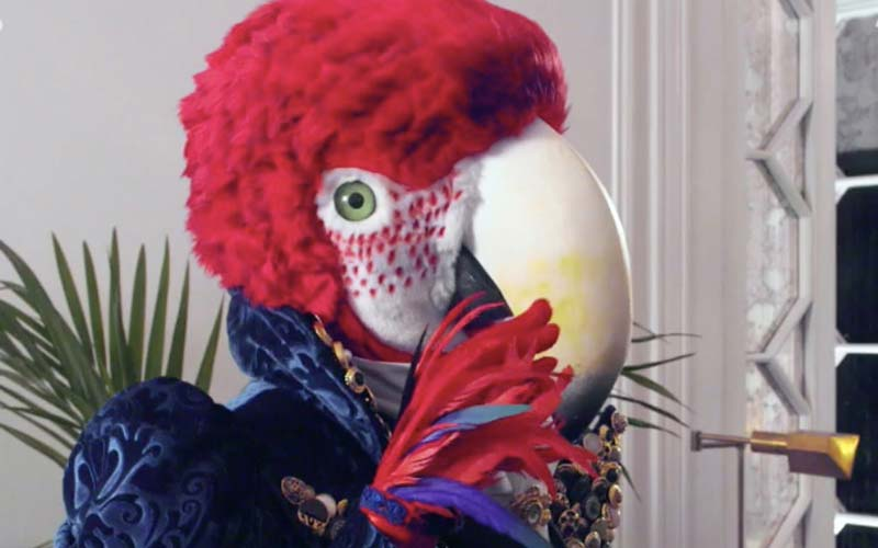 Chi è Pappagallo Il Cantante Mascherato 2021? Vincitore Red Canzian
