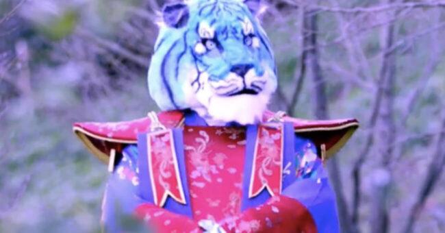 Tigre Azzurra Il Cantante Mascherato